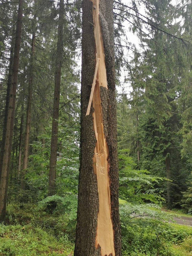 Baum nach Blitzschlag in St. Georgen/W. - Reinhard Ebner